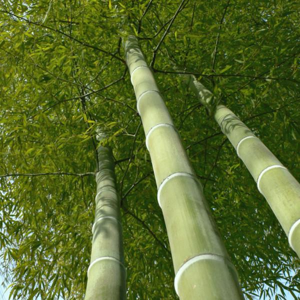 bambu01-1024x768
