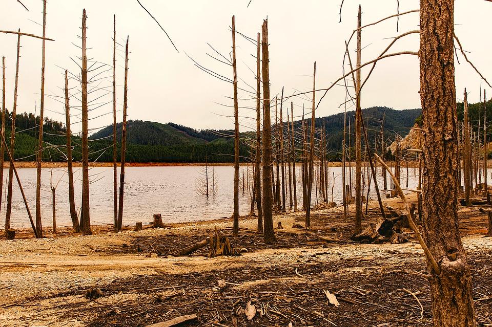 taglio illegale boschi
