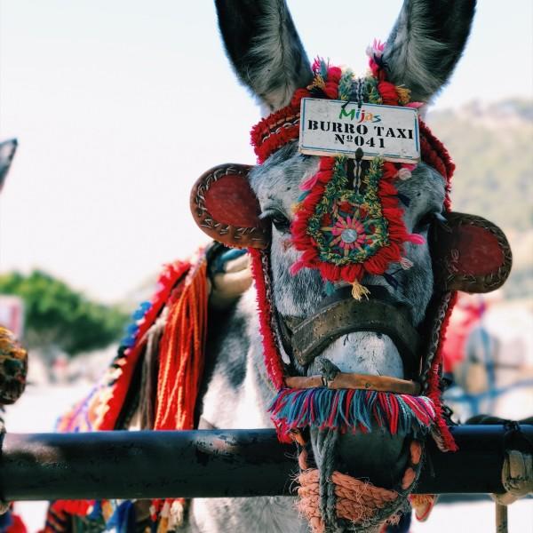 Non prendeteci per il mulo